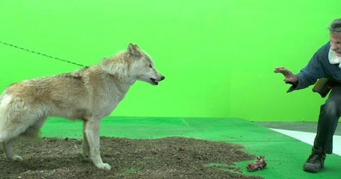 direwolves_01